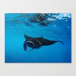 Manta Canvas Print