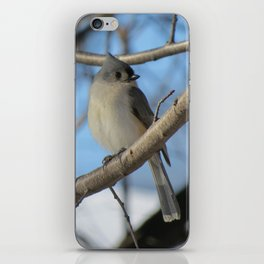 The Tufted Titmouse iPhone Skin