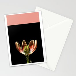 Nigella Pod & Pink Flower Stationery Cards