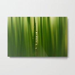 grass greenery Metal Print