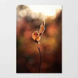 Be True Beyond Distraction Canvas Print
