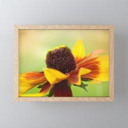 AFE Rudbeckia Framed Mini Art Print