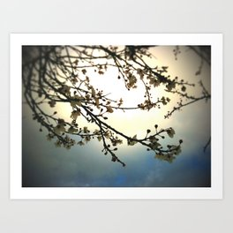 plum bloosoms  Art Print