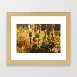 In Good Company Framed Art Print