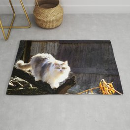 The Beautiful Maine Coon Dilute Calico Rug