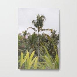 Bali Palms II Metal Print