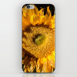 sunkissed sunflower iPhone Skin