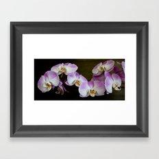 Veronica's Orchids 1 Framed Art Print