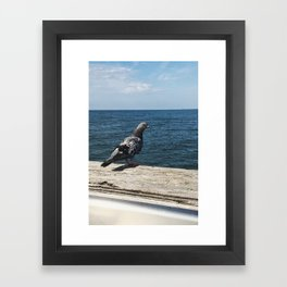 Pigeon on the Water Framed Art Print