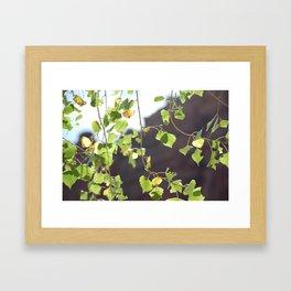 Red Rocks through Leaves Framed Art Print