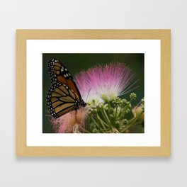 momma's mimosa Framed Art Print