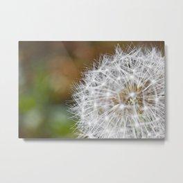 Close up of dandelion in macro Metal Print
