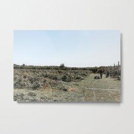 Apple Fields III Metal Print