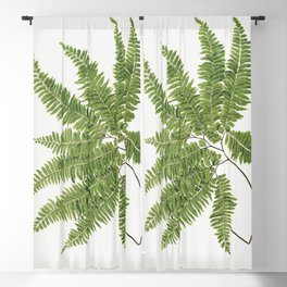 Adiantum Curvatum from Ferns British and Exotic (1856-1860) by Edward Joseph Lowe Blackout Curtain