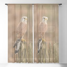 Perched Raptor Sheer Curtain