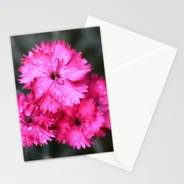 Cluster of Pink Dianthus Stationery Cards