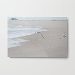 Terns Metal Print