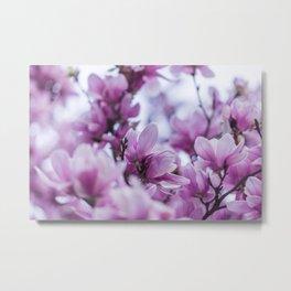 pink magnolia #society6 #decor #buyart Metal Print