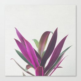 Boat Lily Canvas Print