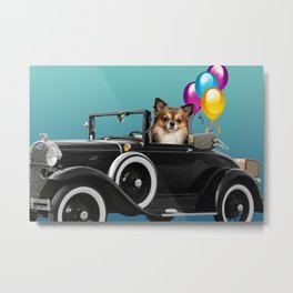 chihuahua Dog in Cabrio with balloons Metal Print