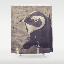 Adorable African Penguin Series 2 of 4 Shower Curtain
