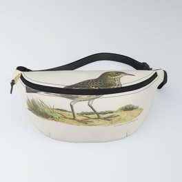 Meadow pipit (Anthus pratensis) illustrated by the von Wright brothers Fanny Pack