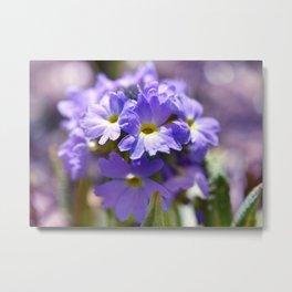 Purple Primrose Metal Print