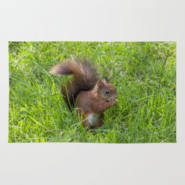 Red Squirrel. Rug