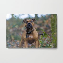 STAFFY IN WOODLAND Metal Print