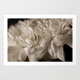 Delicate White Art Print
