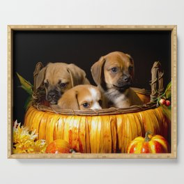 Pumpkin Basket Filled with Two Puggle Puppies and a Beaglier Puppy for Halloween Serving Tray