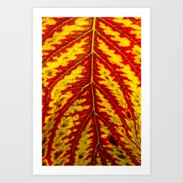 Tiger Leaf Art Print
