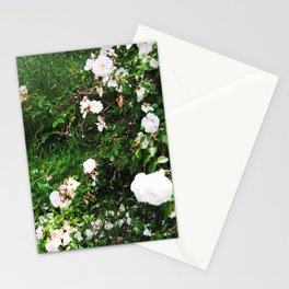 chintz Stationery Cards