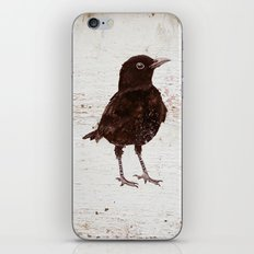Black Bird Blakely (Vintage Edition) iPhone & iPod Skin