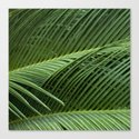 Palm leaves by vanessagf