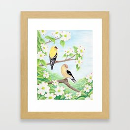 Goldfinches in Dogwood Framed Art Print