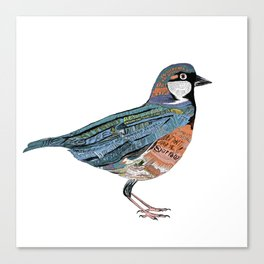 Typographic Sparrow Canvas Print