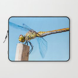 Beautiful colorful dragonfly insect resting on dried bamboo stick in summer taken in close-up Laptop Sleeve
