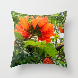 Stunning  flowers of African Tulip Tree at a beach in New Caledonia Throw Pillow