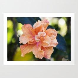 Jane Cowl Tropical Hibiscus Alternate View Art Print
