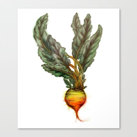 Rooted: The Golden Beet Canvas Print
