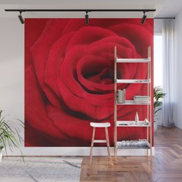 Expansion red rose flower Wall Mural