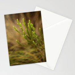 Veadeiros Stationery Cards