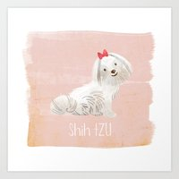 shih tzu Art Prints featuring Shih Tzu by 52 Dogs