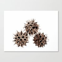 gumball Canvas Prints featuring Gumball Trio by Beth Thompson