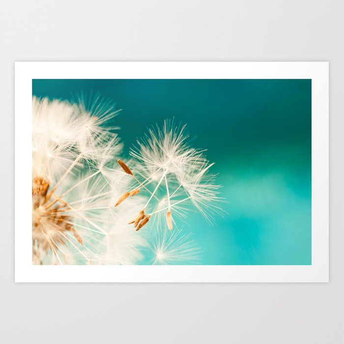 dandelion seeds blowing in turquoise Art Print