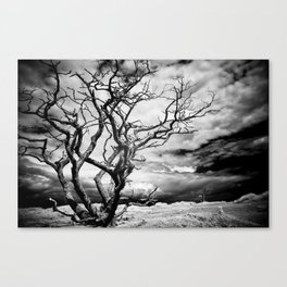 the tree at the end of the world Canvas Print