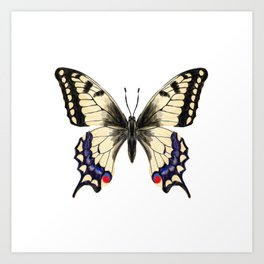 Swallowtail Butterfly - butterfly art, painted butterfly, butterfly design, sweet butterflies Art Print