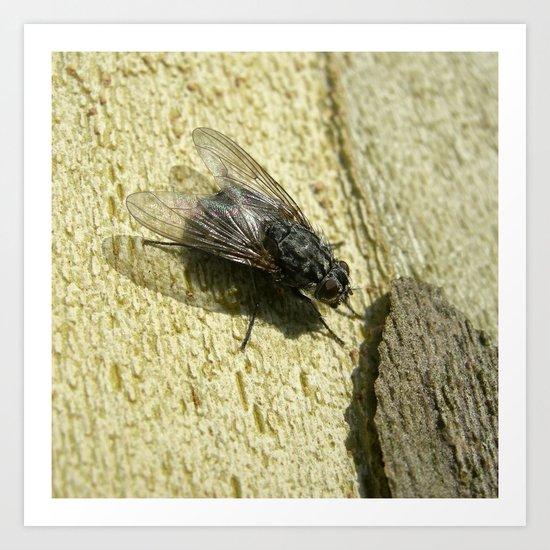 housefly macro II Art Print