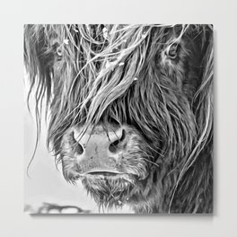 Higland  Cow Face Metal Print